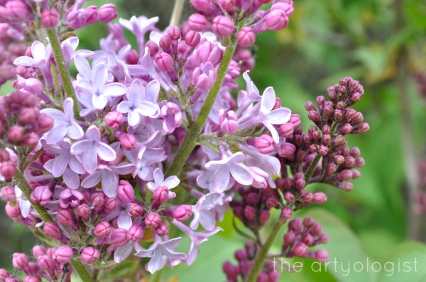 image of spring flowers lilacs the artyologist