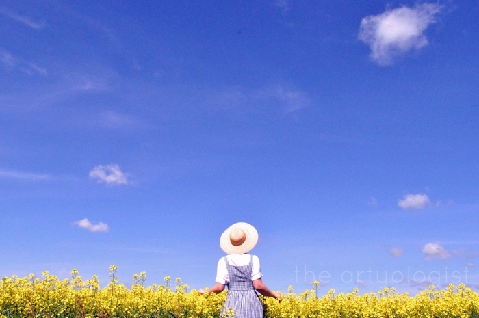 landscape in yellow field of canola the artyologist