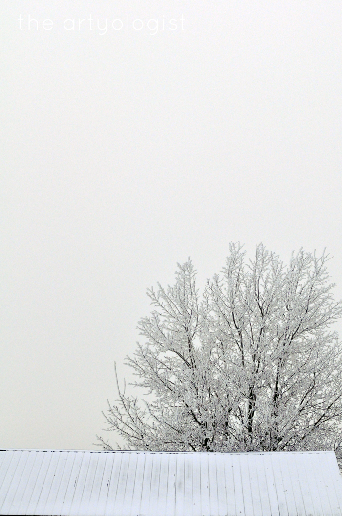 tree-and-sky, rime frost, the edge of winter, the artyologist