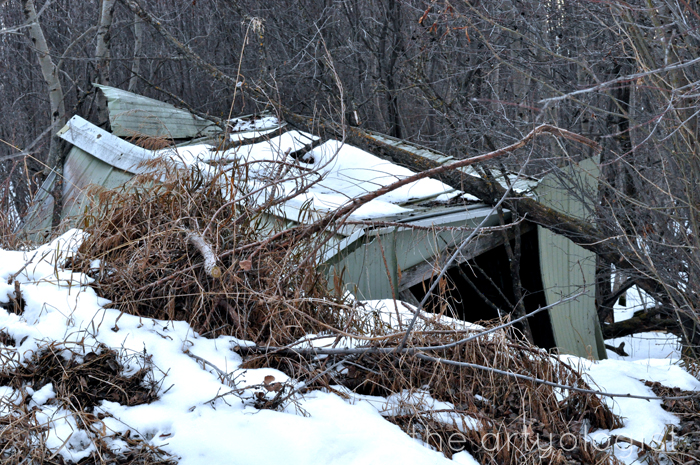 The Navy and the Redcoats, the artyologist, abandoned bunker