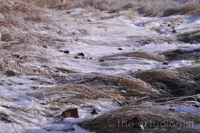Here Comes The Sun, the artyologist, frosted grasses
