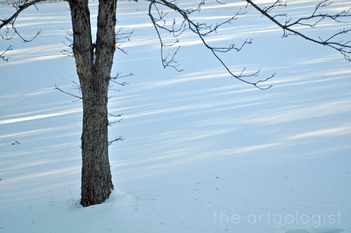 White Wonderland, the artyologist, trees and shadows