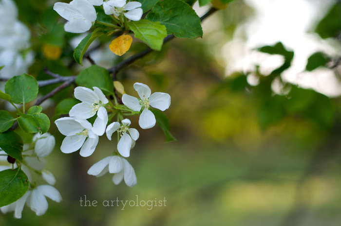 Salvaging a Sewing Project with Vogue 8789, the artyologist, blossoms-2