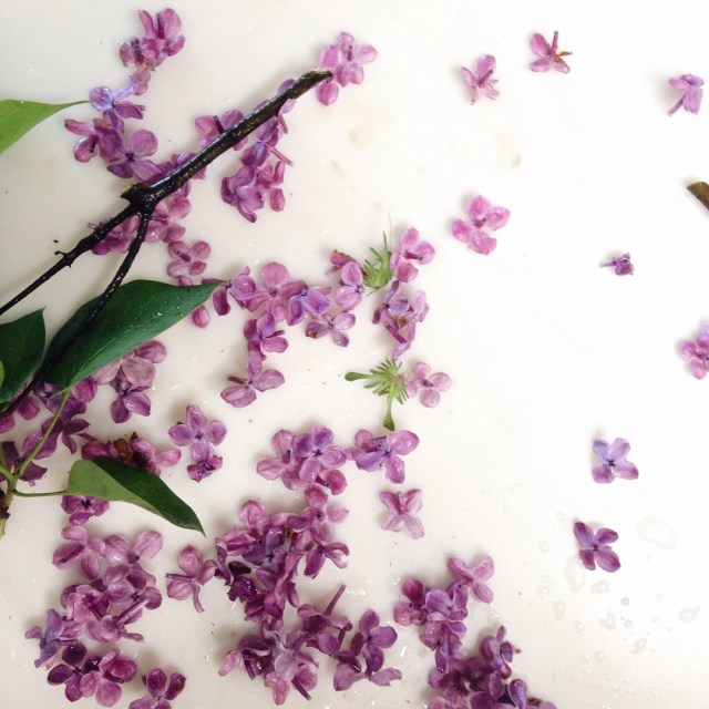 Are you tired of the lilacs yet? Im not hellip