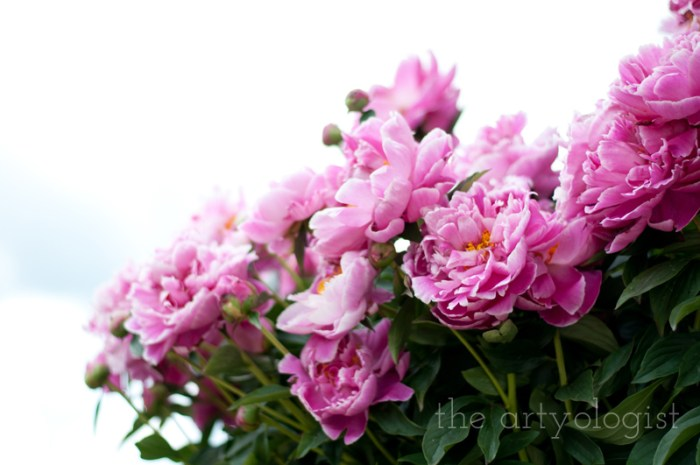 peonies-and-sky, the artyologist