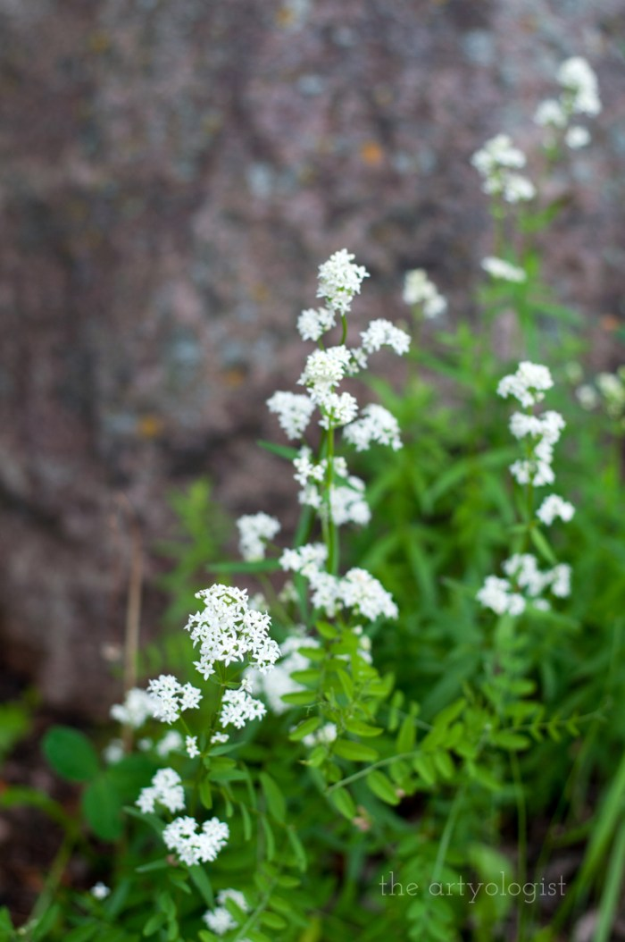 white-flowers-and-rock, the artyologist