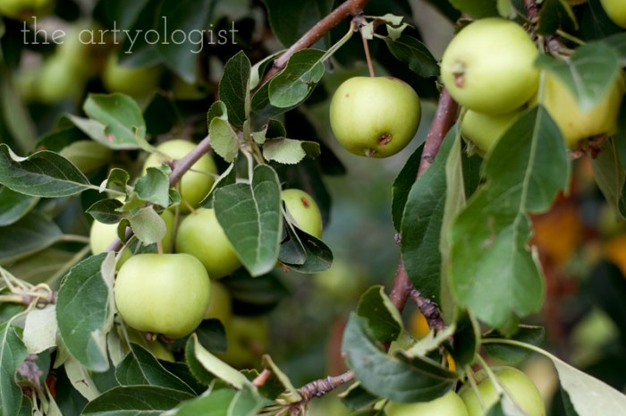 Photo Journal: Fall Time at the Farm, the artyologist, apple branch