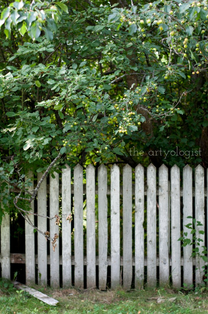 Photo Journal: Fall Time at the Farm, apple trees and an old fence, the artyologist