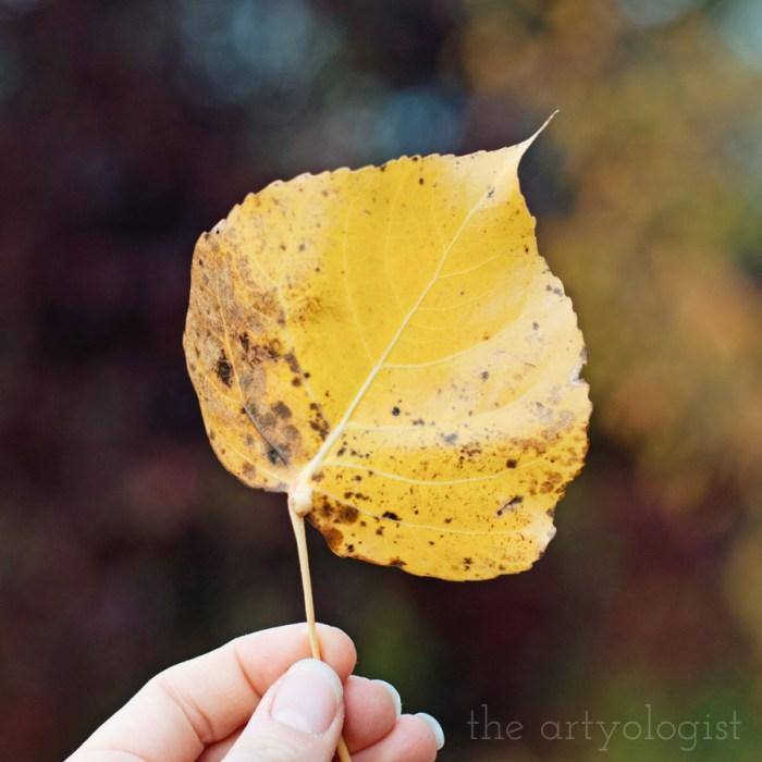 seasons of change, the artyologist