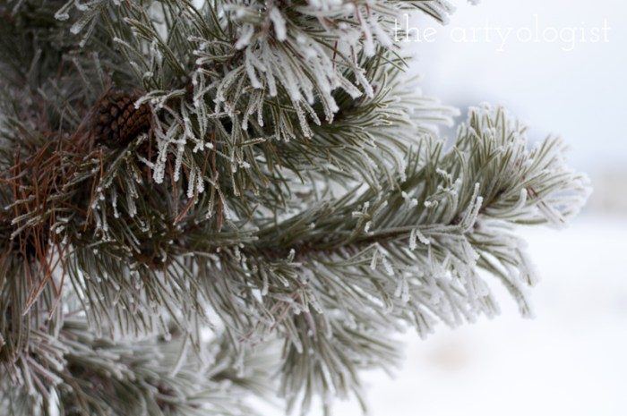 winters-day-pine-branch, the artyologist