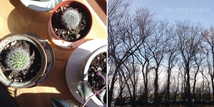 cactuses and trees