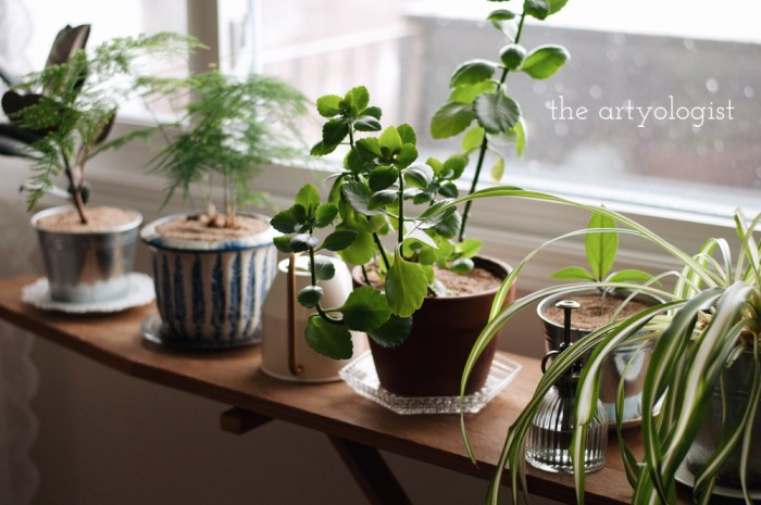 row of plants, life lately