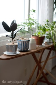 house plants, the artyologist