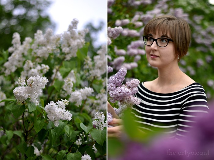 a lilac hedge covered in blooms