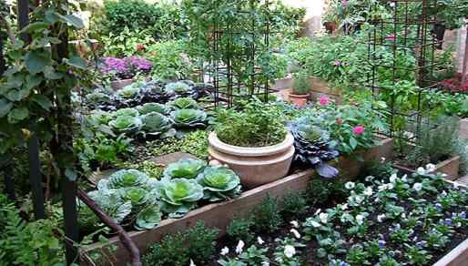 cooks-garden-northeast-1
