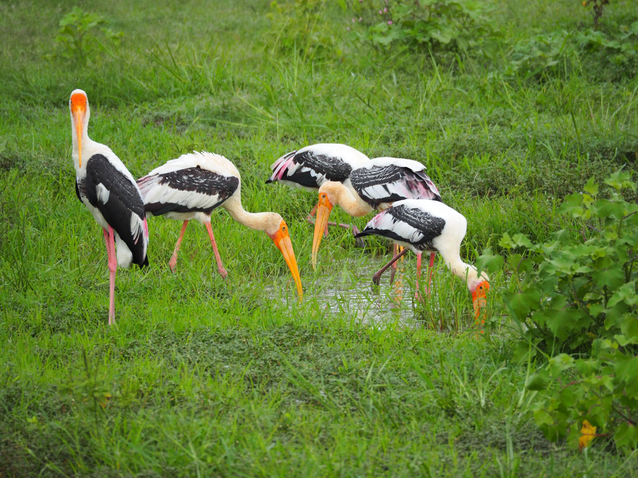 Birds in Udawalwe National Park