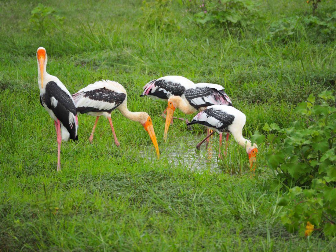 Birds in Udawalwe National Park