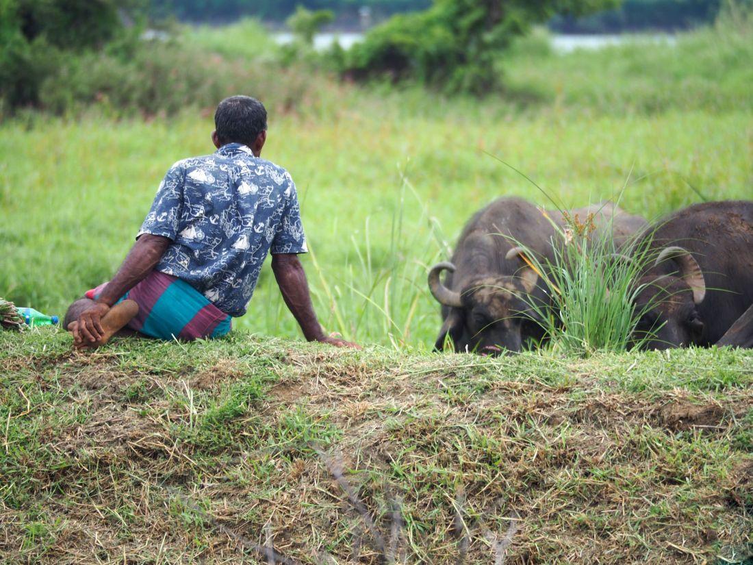 Man with buffalo at Master Campers Udawalawe