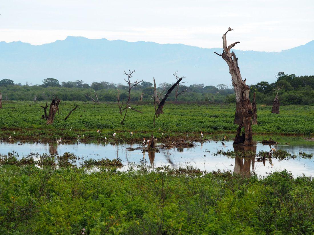 Wetlands Udawalwe National Park