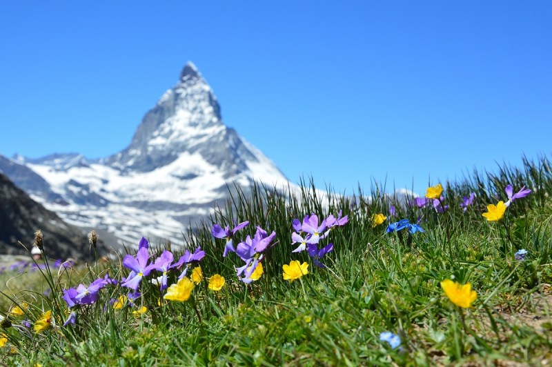 Alpine mountains with spring flowers