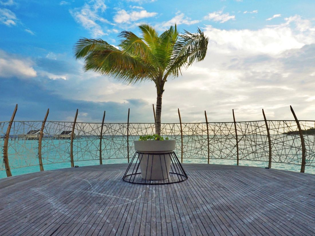 Palm tree over water in Maldives
