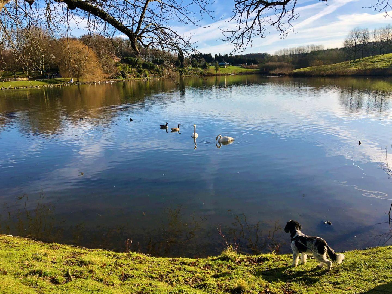 Dog at Leeds Castle Lake