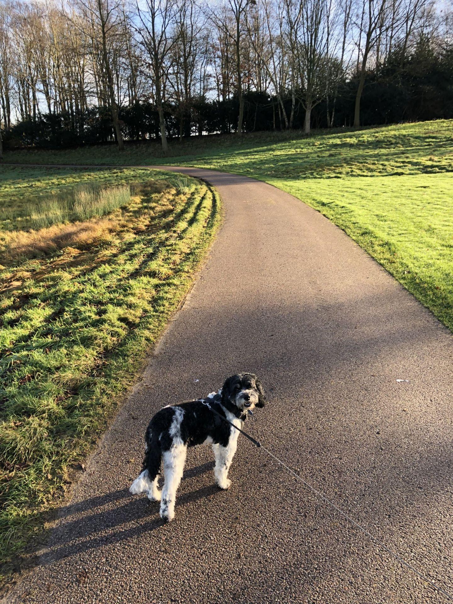 Walking dog in Leeds Castle Grounds