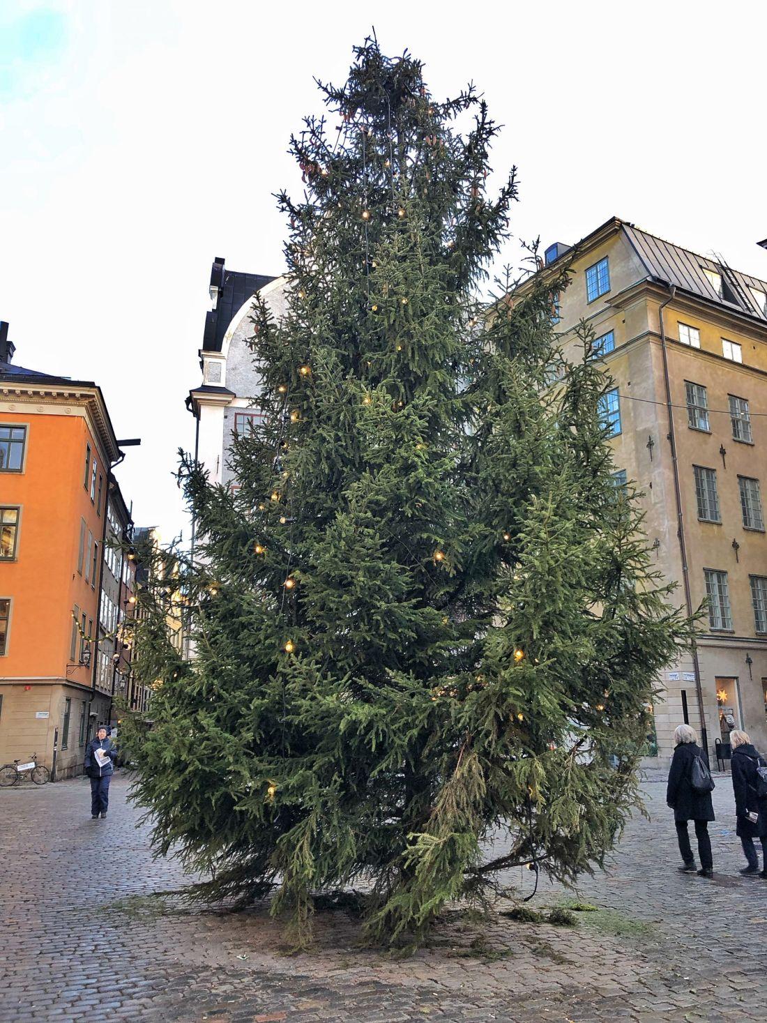 Christmas Tree Gamla Stan Stockholm