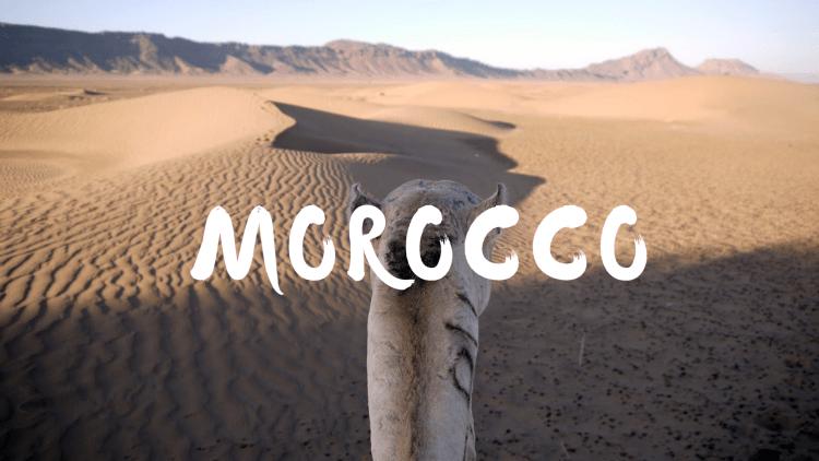 Camel in Sahara Desert Morocco
