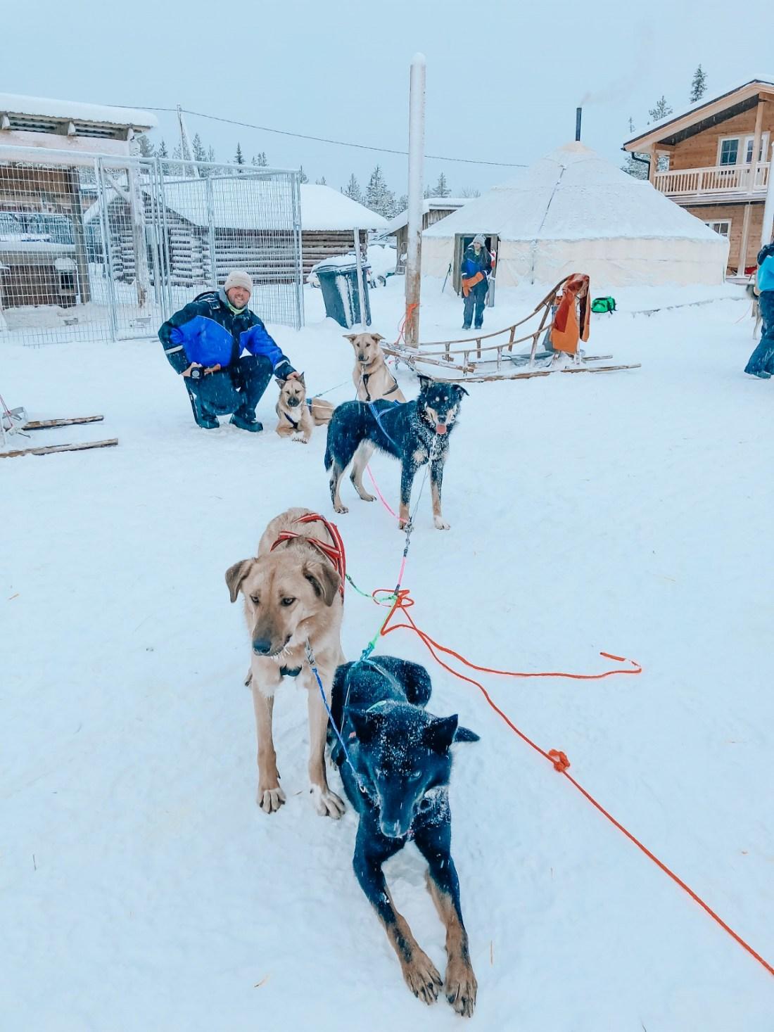 Dan with Sled dogs Bearhill Husky