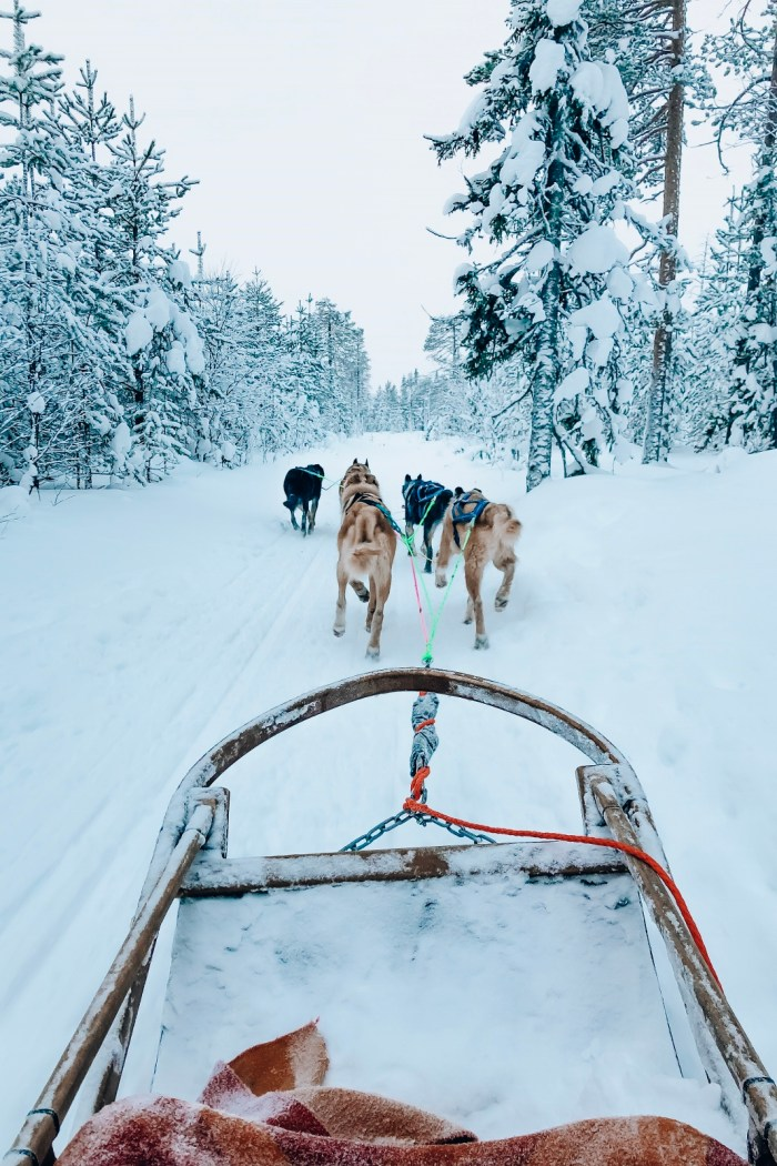 Dog Sledding with Bearhill Husky Rovaniemi
