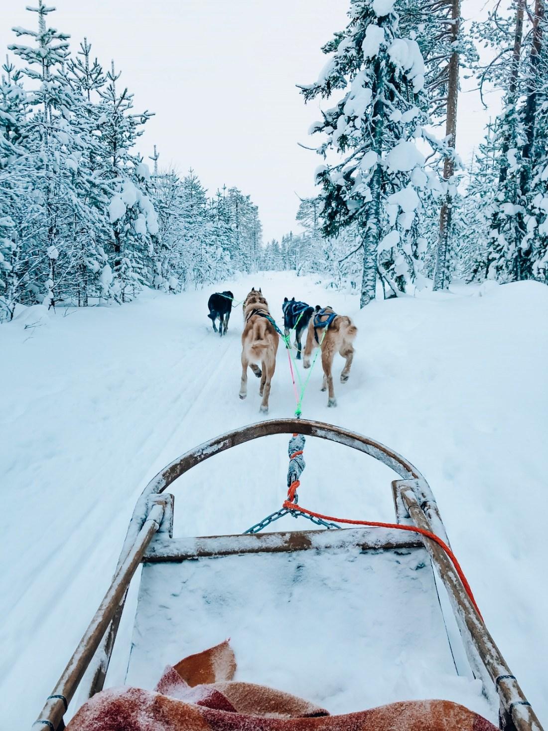 Dog Sledding Bearhill Husky Finland
