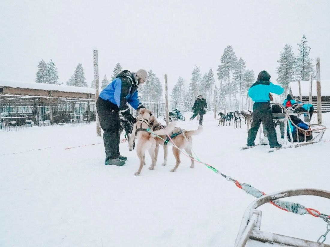 Petting dogs at Bearhill Husky