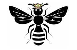 Queen Bee Workshop Series