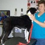 Doggie Wellness Weekend
