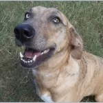 Susan Wright - Well Pet Awareness Fair - Austin