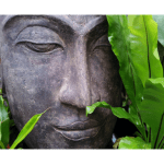 The Austin Alchemist Media Company offers body mind spirit news resources and events - buddha-statue-zen