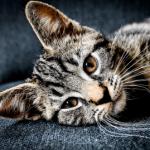 The Austin Alchemist Media Company offers body mind spirit news resources and events - cat-pet-alternative-health