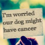 I'm worried our dog might have cancer
