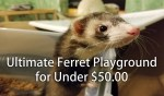 Ultimate Ferret Playground for Under $50
