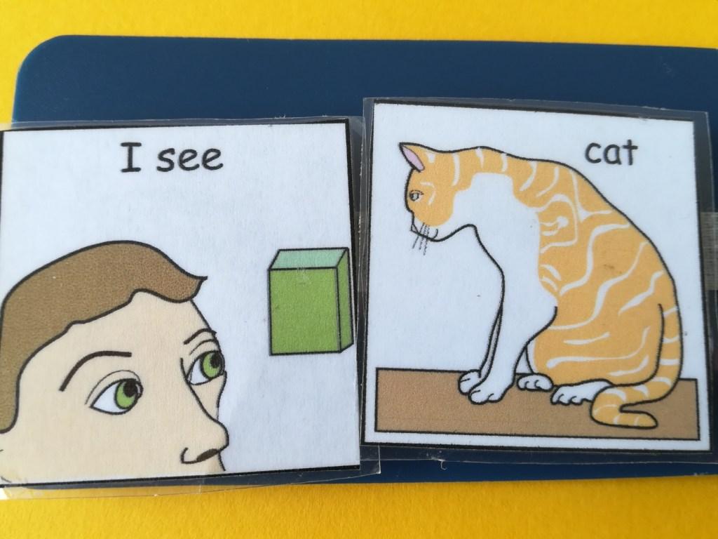 i see cat