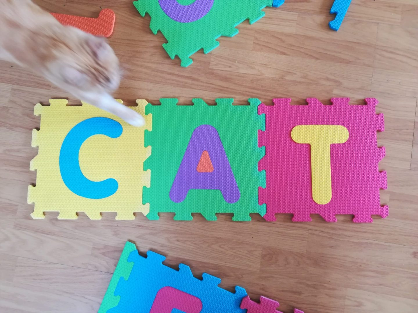 Cat Cat spelt out on floor puzzle