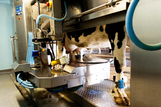Automated Milking System