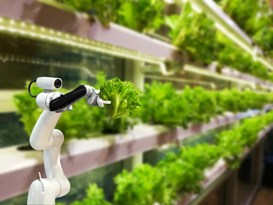 the future of vertical farming and automation impact