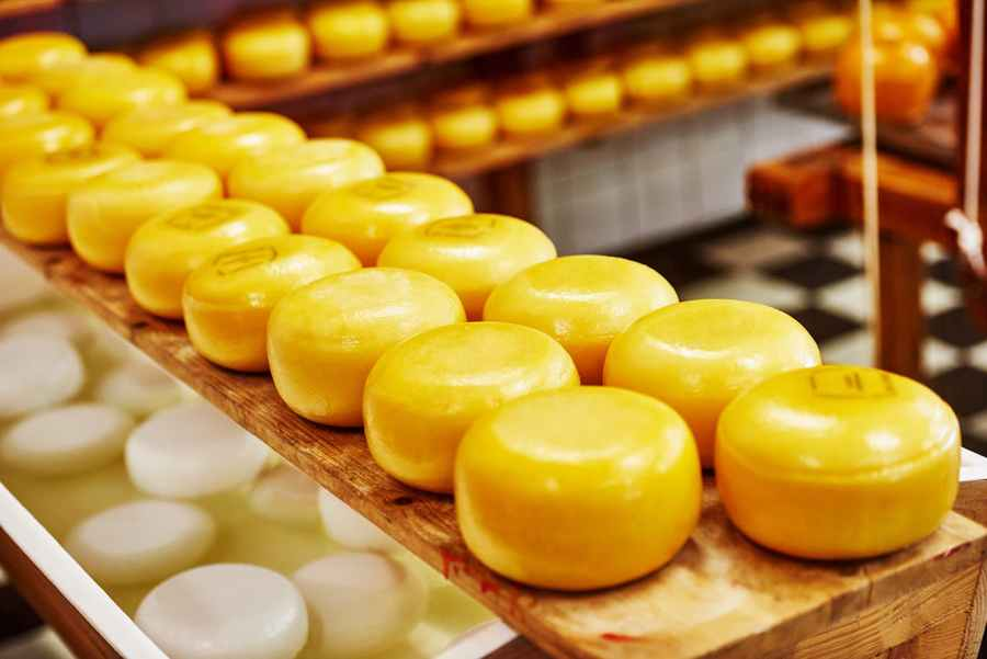 vsd-in-dairy-industry-cheese-making