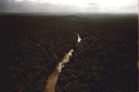 Jungle surrounding Jonestown