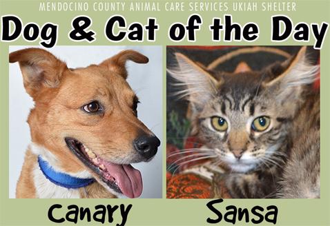 Canary&Sansa