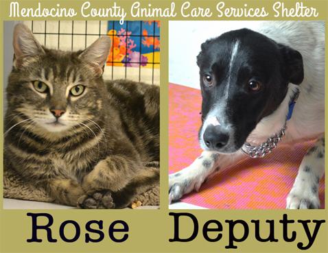 Rose&Deputy