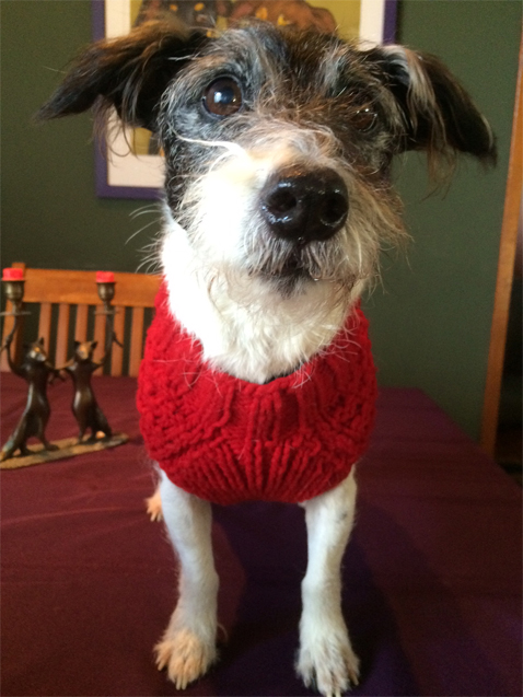 dogwithsweater