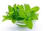 mint-leaves1-300×214